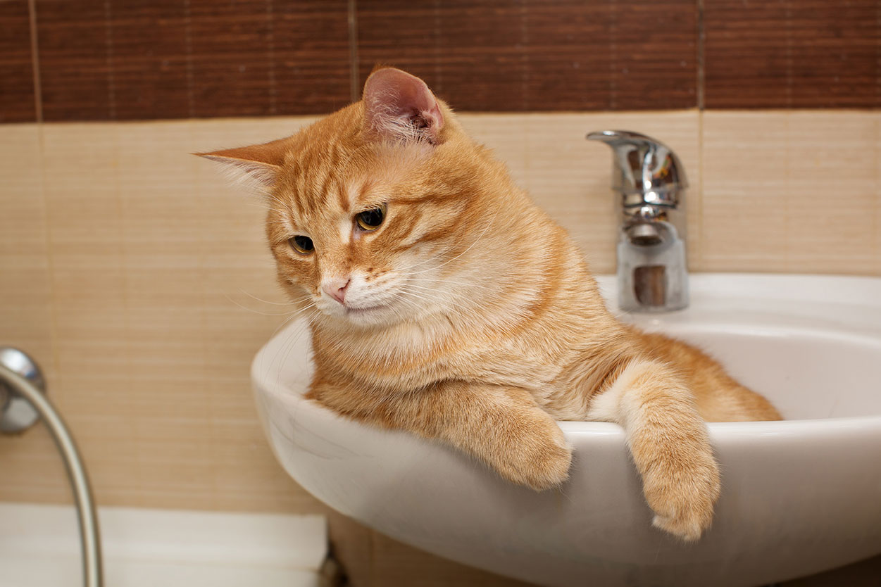 Is your bathroom shared with a pet?
